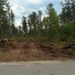 Trees cut, and the road roughed out